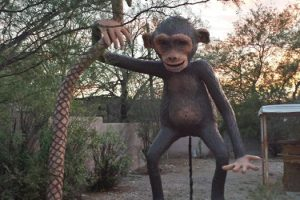 huettner_monkey